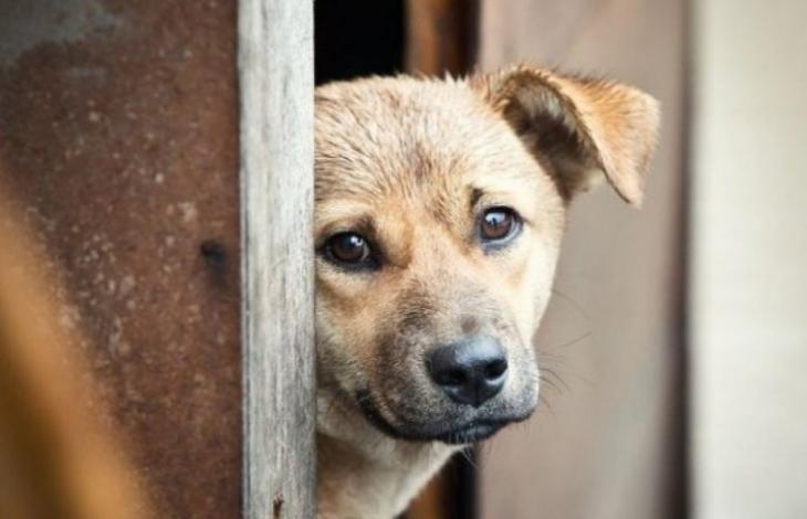 Черкащанину, що вилами заколов собаку, призначили умовне покарання