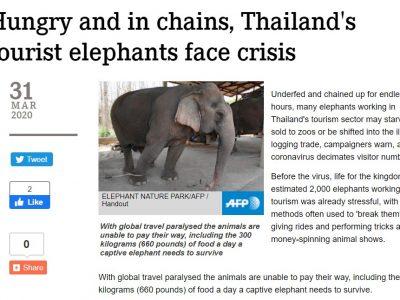 слони таїланду