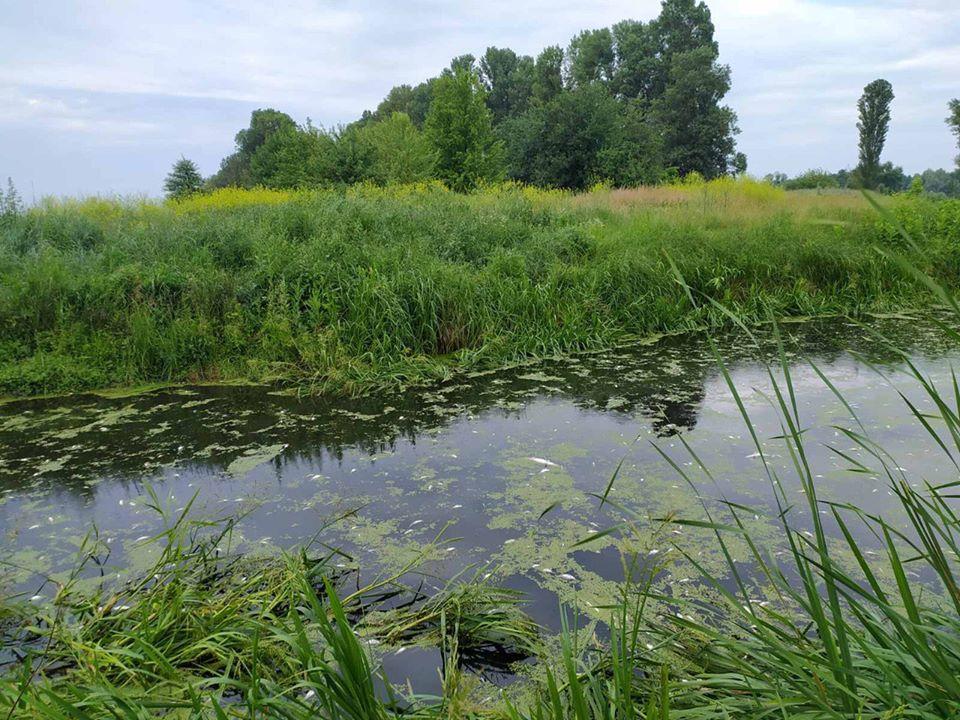 Екологи з'ясували, чому загинула риба в річці Тясмин (ФОТО)