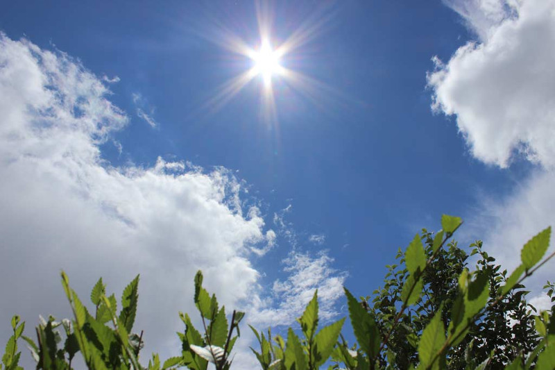 Погода у державні вихідні буде по-справжньому літньою