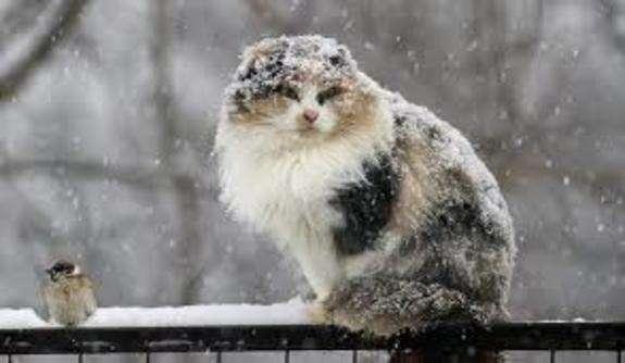 На Черкащині почнуть сильнішати морози