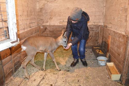На Черкащині родина врятувала та приручила косулю