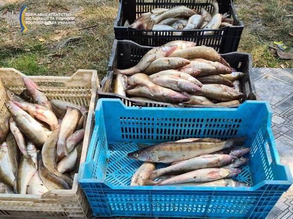 Збитки майже 250 тисяч гривень: на Черкащині викрили рибака